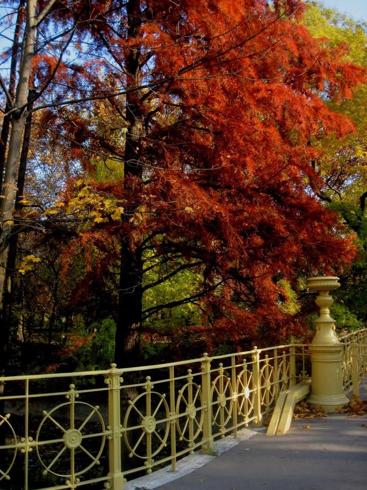 Autumn in Hungary - Margitsziget