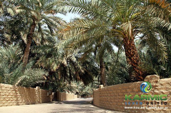 Al Ain Oasis Tour