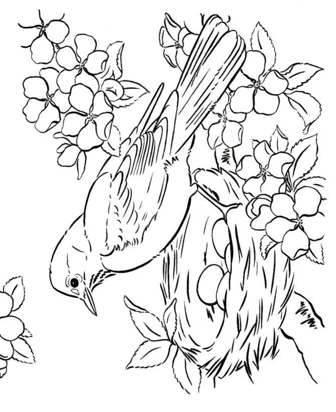 - sketch art Vogel malvorlagen Malvorlagen frühling