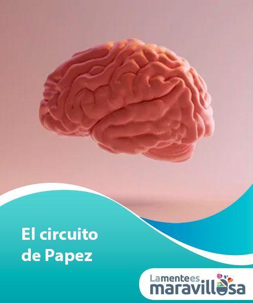 Circuito De Papez : El circuito de papez negocio y profesión