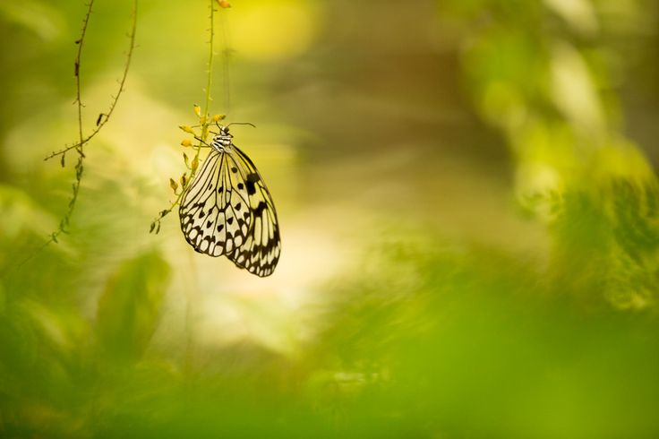 Butterfly   Nature Photography Clay Jar Photography