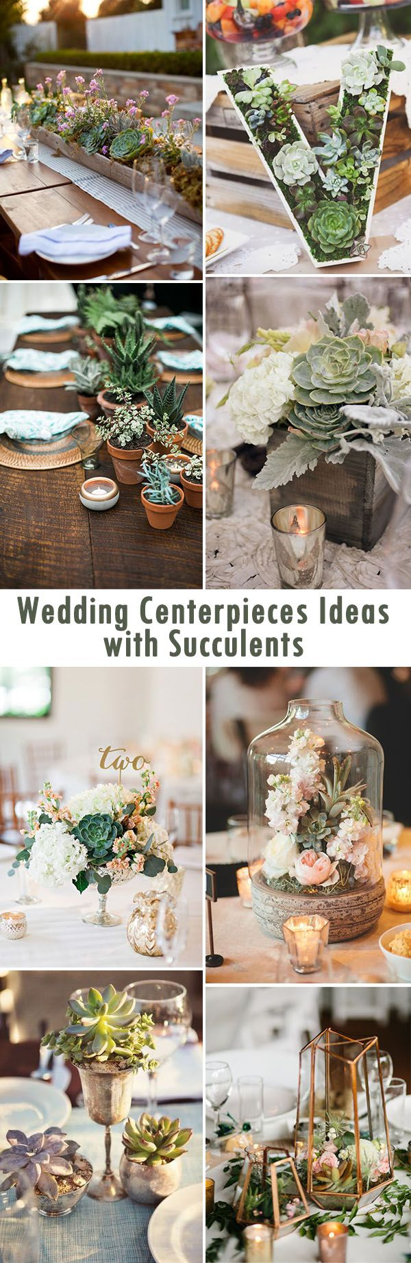 Succulents are the perfect addition to a wedding and can serve as a centerpiece! | ElegantWeddingInvites