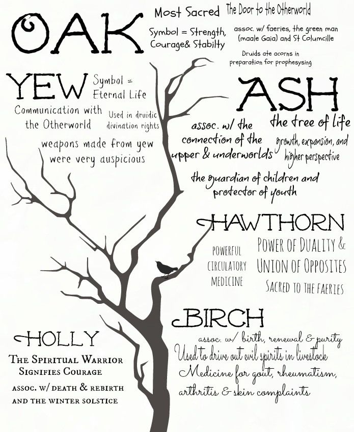 runes from nut bearing tree - Google Search