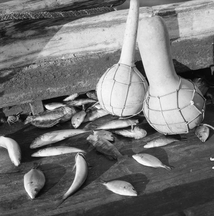 Photo by Zacharias Stellas. Benaki Museum Photographic Archive