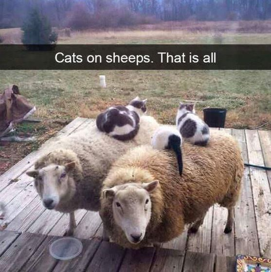 15 Cat Memes
