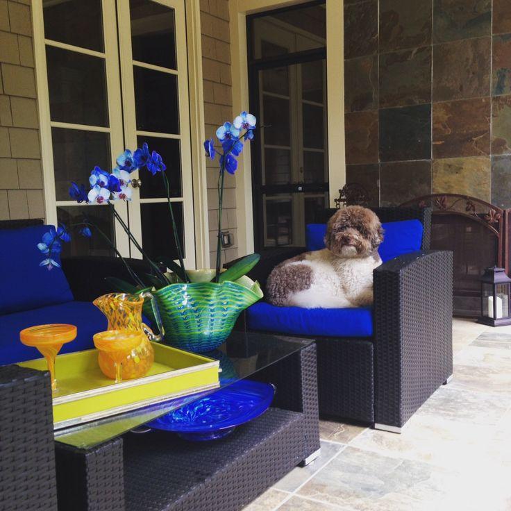 Pet Friendly Home Decor: 18 Best Images About Pet Friendly Homes-Designs For A