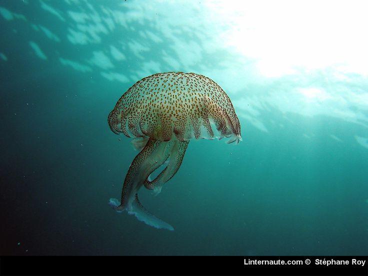 Dans l'eau ou sur la terre, ils nous accompagnent partout