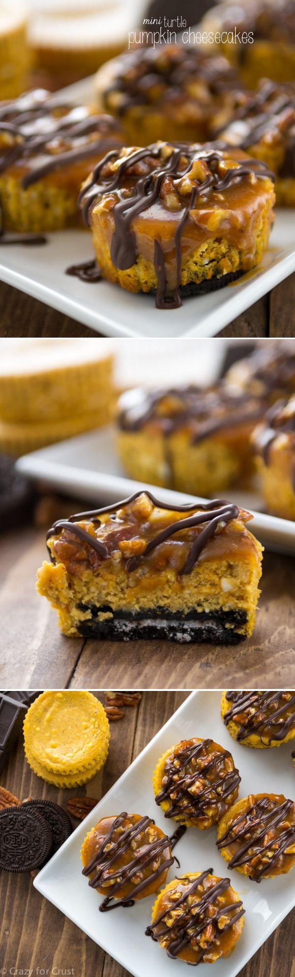 Mini tortuga de queso de calabaza con una corteza de Oreo y cubierto con caramelo, nueces y chocolate.  Perfecto para Acción de Gracias!