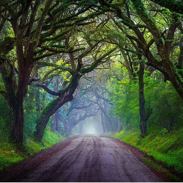 Nice drive down a misty and magical road in South Carolina.  Photography by @pepe_soho  #aroundtheworldpix