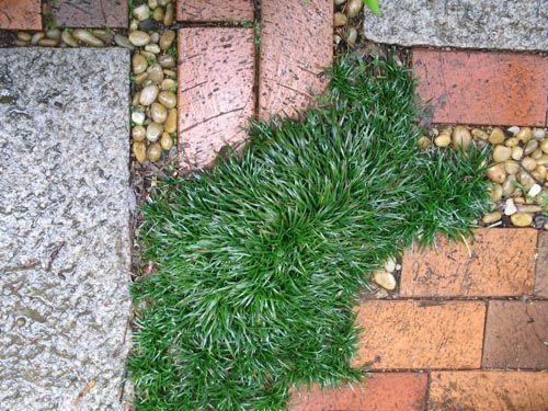 Alex's Garden:男庭日記♪:素材 - livedoor Blog(ブログ) それはレンガや石だ。13年前に庭作りを始めた時に芝生の中に花崗岩とオーストラリアレンガで通路を造ったが、その後、芝生は雑草だらけになり植物も増え、砂利と  ...