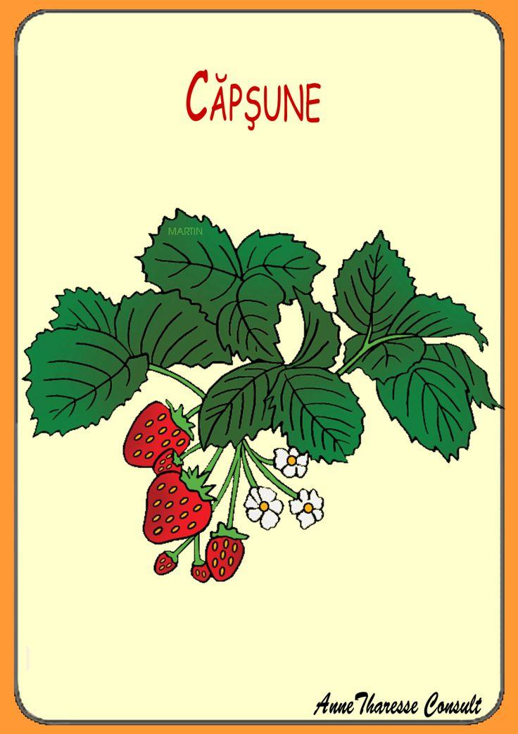 Cartonaşe ilustrate - Plante