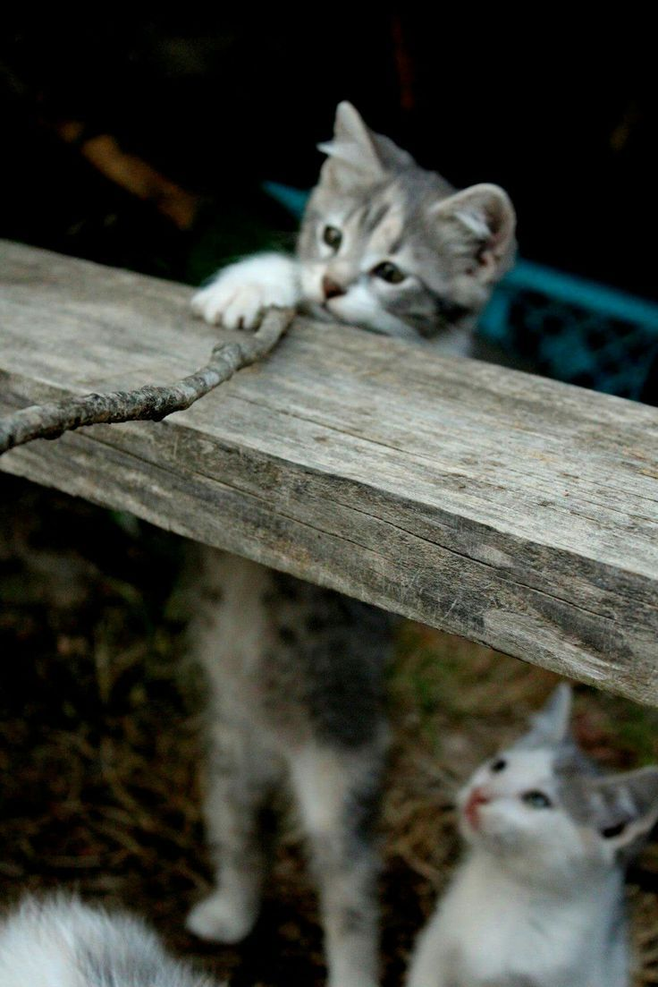 25080 best Cute cats and kittens images on Pinterest | Kitty cats ...