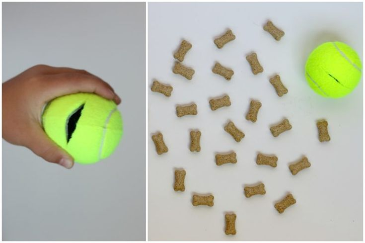 Juguetes para perros de bricolaje con viejas pelotas de tenis   – Cat & Dog ideas