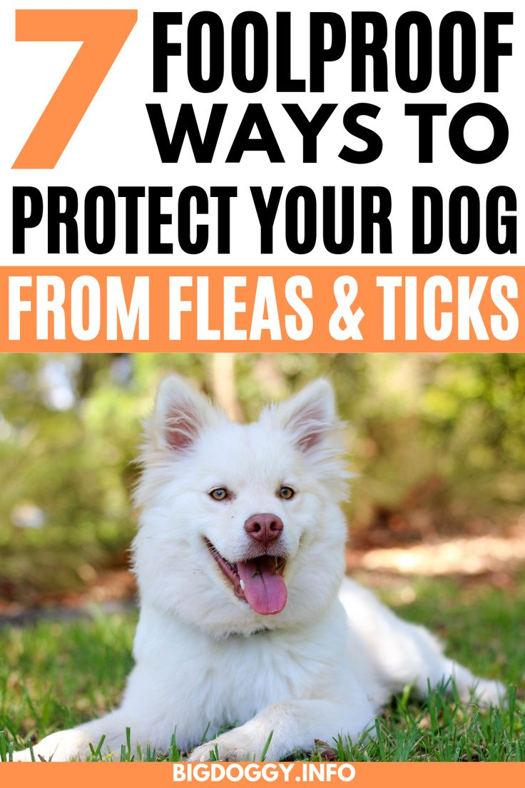 how to tell if dog has fleas or ticks