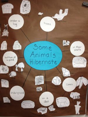 Inquiring Minds: Mrs. Myers' Kindergarten: Animals In Winter Inquiry- The Investigation Phase