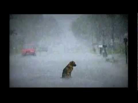VERY SAD PIANO SONG (this will make you cry)..NO ABANDONES A TU MASCOTA  ELLA NO LO HARIA...