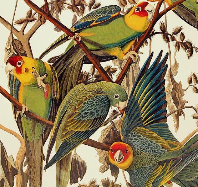 john+james+audubon+images | audubon-john-james.jpg