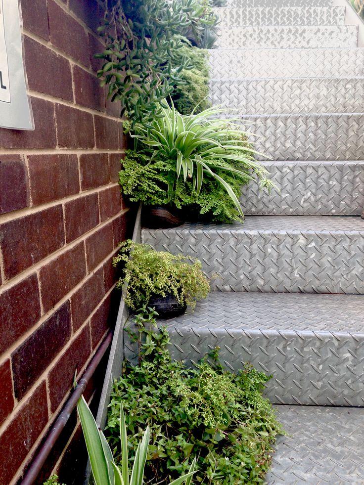 #8 LushStairs_Rooftopgarden_Durban_SouthAfrica #garden #stairs #gardening