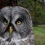 Owl: Child Abduction Teams Widespread