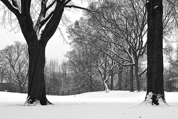 My Monarch Park study from the same spot, of the same image, during different seasons and conditions brought me here after a fresh blanket of snow, some of which also clung to the trees. #winter, #trees, #snow