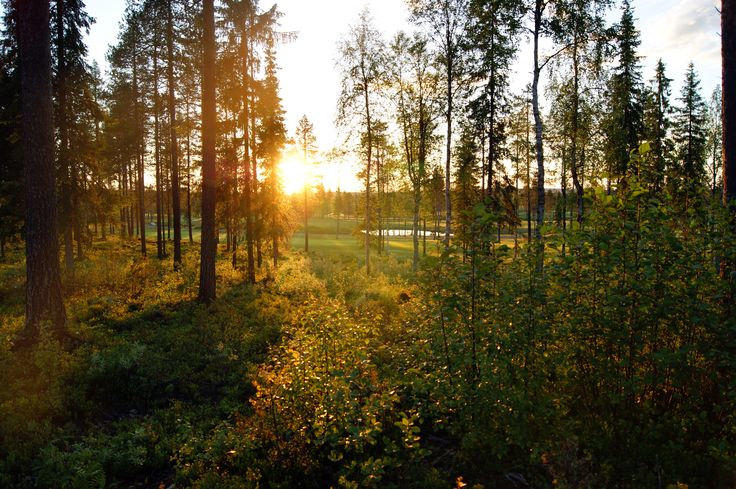 You could easily imagine to find summernight elves around here! Midnight sun in Finnish Lapland. #summer #midnightsun #levilapland #levigolf  ©MarikaLindström