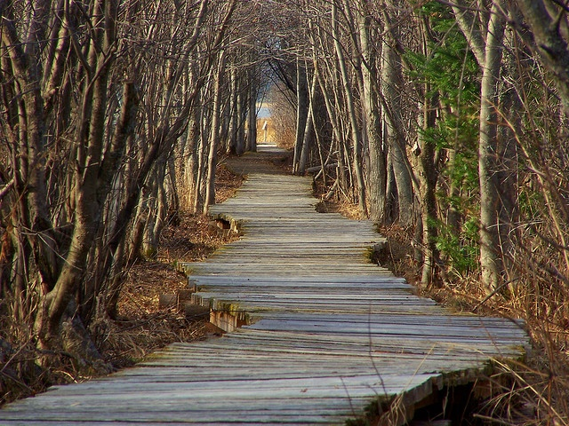 New Brunswick, Canada - Sorcerers path, Daly point