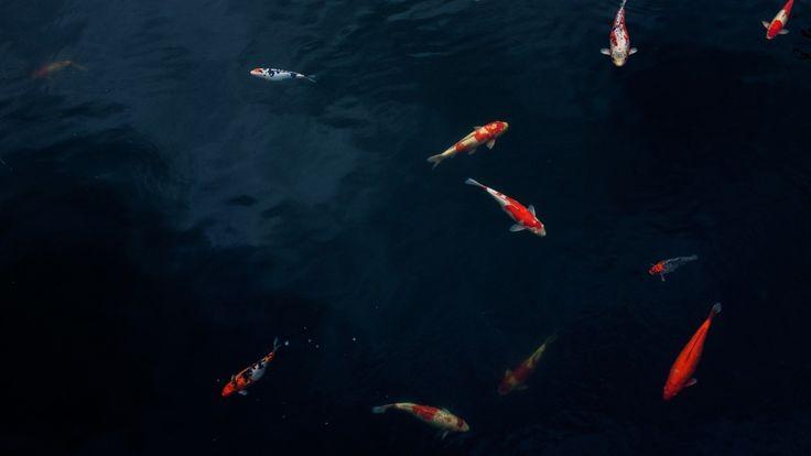 Thực vật và động vật thủy sinh lấy được các chất dinh dưỡng thiết yếu canxi và magiê từ trong nước và thức ăn của chúng. [[MORE]]Giới thiệu Nồng độ canxi và magiê ít khi được đo ở các vùng nước nuôi...
