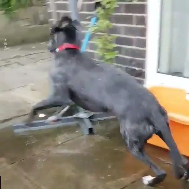 Dog really loves his new trampoline