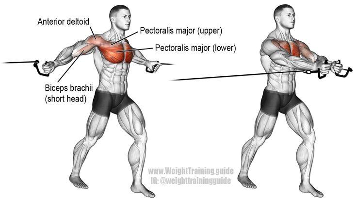 Cruces de cable medio. Un ejercicio de aislamiento. Músculo diana: Esternal (inferior) Pectoral mayor. Músculos sinérgicos: Clavicular (Superior) Pectoral Mayor, Deltoide Anterior y Bíceps Braquial (especialmente cabeza corta).