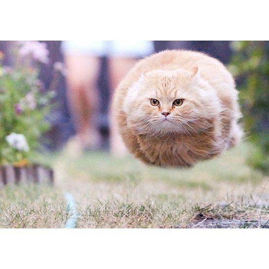 The AVERAGE (not Garfield types) house cat  actually has a higher maximum speed (30 mph) than the worlds fastest man (27 mph)... They're talking about Usain Bolt!  #Catsofinstagram #ilovemcat #Instagramcats #Catoftheday #Lovecats #Fastcat