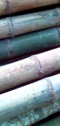 bamboepaal.be allerlei kleuren en maten