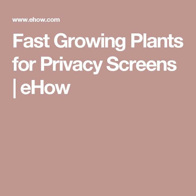 Fast Growing Plants for Privacy Screens   eHow