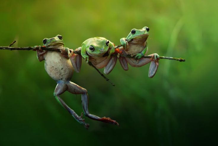 Photo fairy frog story by Harfian Herdi A Rais on 500px