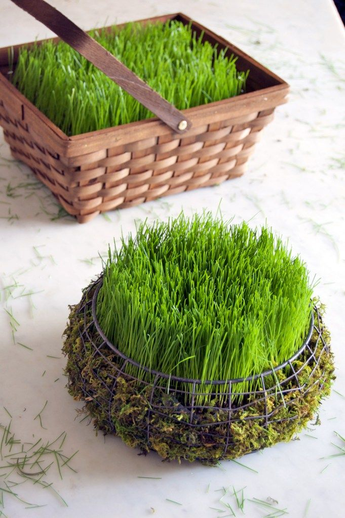 DIY - CREATE AN EASTER BASKET FILLED WITH REAL GRASS IN 5 DAYS using Rye grass seed. - from  The Art of Doing Stuff