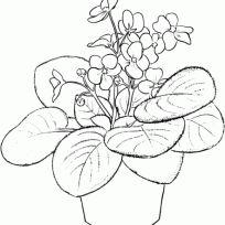 Çiçekler: Menekşe Çiçek: Bahçe İçin Güzel Çiçek Boyama Sayfaları Saintpaulia Ionantha Or Violet Array ile Afrika Boyama Sayfası x