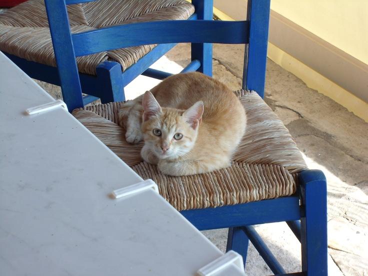 Die Veranstaltungsorte liegen in dem Teil Kretas, wo sich vorwiegend deutsche Urlauber finden. Paleochora. www.groessenwahn-verlag.de www.radio-kreta.de