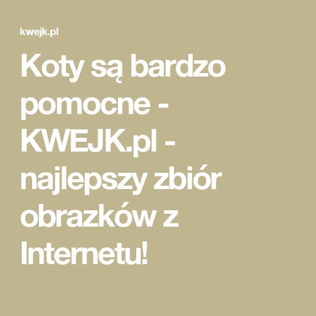 Koty są bardzo pomocne - KWEJK.pl - najlepszy zbiór obrazków z Internetu!