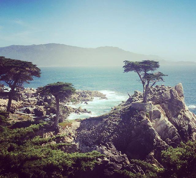 Dålig research från min sida - vi hamnade på 17 mile drive på Monterey-halvön av en slump... FLAX kallas det för det var en otroligt fin 17 mile drive mellan Monterey och Carmel by the Sea där vi bor nu i två nätter. Jonas fotade golfbanor (inåt landet) och jag fotade träd & hav (utåt landet). Är ni i krokarna - kör den! Har ni mer än 10 dollar som det kostar att köra så kan ni spela en runda på t ex Pebble Beach golfbana också men i mitt tycke var det tillräckligt wow att köra…