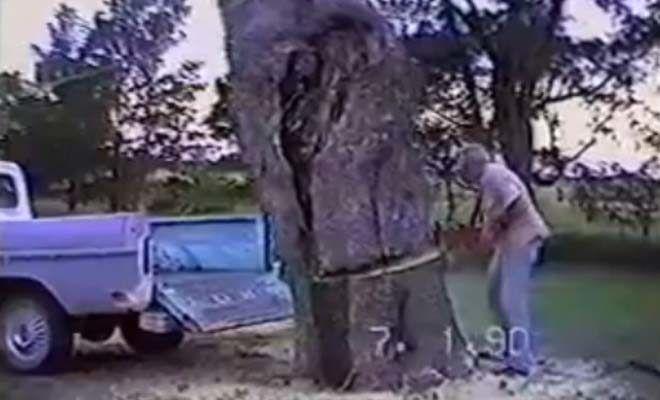 Σίγουρα δεν περίμενε αυτό που συνέβη… Η κοπή ενός δέντρου κατευθείαν στην καρότσα του φάνηκε καλή ιδέα (ΒΙΝΤΕΟ)  #Viral