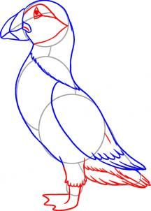 How to draw a puffin. Newfoundland and Labrador native.