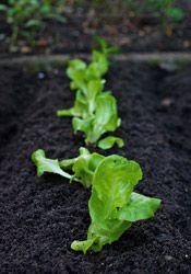 Garden tips for Illinois: Garden Farm, Extension, Garden Depends, Veggie Gardens, Garden Tips, Future Garden, Design