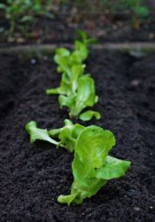 Garden tips for Illinois