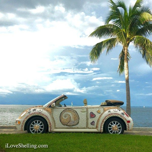 Shell Love Bug enjoying the water view.