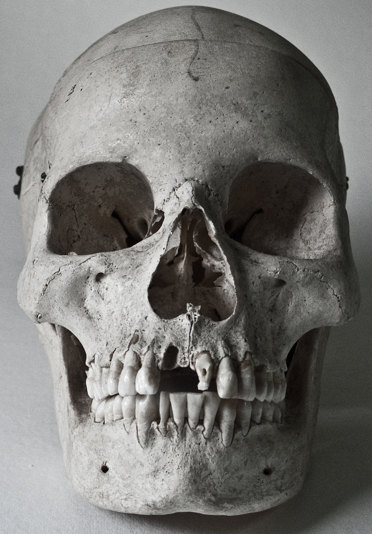 skull reference art reference material pinterest art
