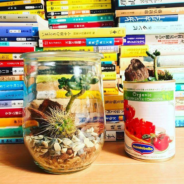 【tomokiokura】さんのInstagramをピンしています。 《友人招いて手作りテラリウム。 カリフォルニーに仕上げました。 トマト缶はおまけ。 ・ ・ #teraryum #plants #cactus #palmsprings #book #workshop #テラリウム #サボテン #カリフォルニア #パームスプリングス #ワークショップ》