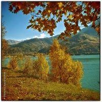 """""""La Rouille de l'Automne"""" : Photos d'Art à vendre en Tirage Limité - Photos : © François-Xavier PRÉVOT - http://www.photographe-marseille.eu/VENTE-DE-PHOTOS-D-ART-La-Rouille-de-l-Automne,137,7,fr,f1.html - Photos d'Art Tarifs: http://www.photographe-marseille.eu/Vente-Photos-d-Art,rub,fr,14.html #photo #photographe #art #tirage #exposition #rouille #montagne #alpes #lac #automne #saison #feuille #vert #orange #photographie"""