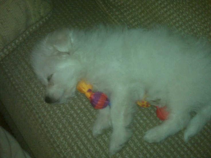 Little Bear fell asleep playing <3