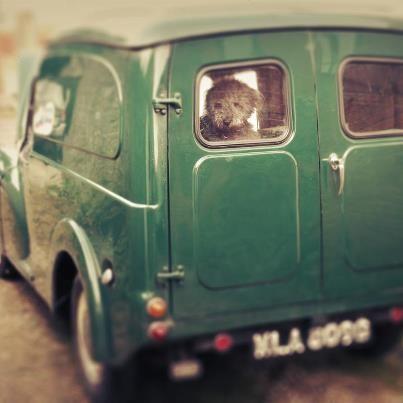 Morris Minor van and cute dog