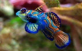 Résultats de recherche d'images pour «poisson tropicaux»