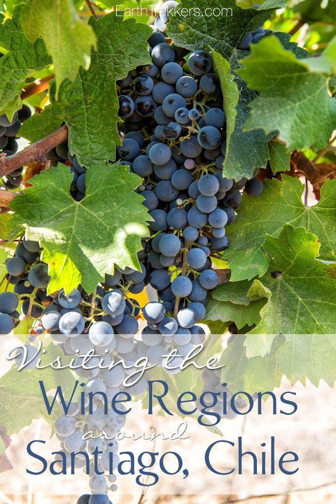 How to Visit the Wine Regions around Santiago, Chile without taking a tour. Includes Maipo Valley, Colchagua Valley, Casablanca Valley, and Aconcagua Valley. Advice on scheduling tours and tastings, wine tasting with kids, and the best Chile wine regions to visit.